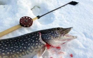 Ловля щуки в декабре на жерлицы – поиск точек, расстановка и оснастка