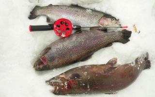 Снасти для ловли форели на платниках зимой