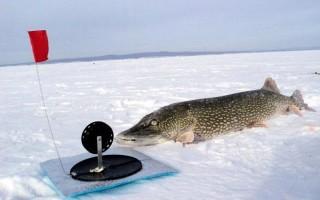 Жерлицы по первому льду – тактика рыбалки, особенности оснастки
