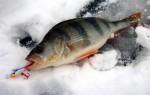 Ловля окуня на балансир зимой – правильная техника, тактика и оснастка