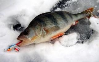 Ловля окуня на балансир зимой — правильная техника, тактика и оснастка