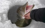 Ловля щуки зимой – тактика, техника и снасти