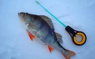 Окунь в феврале на мормышку – тактика и техника ловли