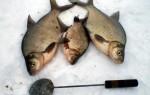 Мормышки на леща зимой — приманки, тактика и техника ловли
