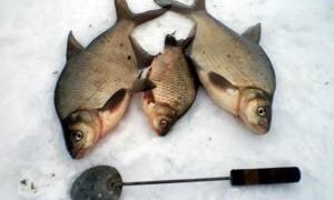 Мормышки на леща зимой – приманки, тактика и техника ловли