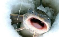 Особенности ловли налима зимой – тактика поиска на водоеме, снасти и секреты