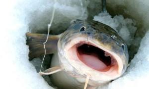 Ловля налима зимой – тактика поиска на водоеме, снасти и секреты