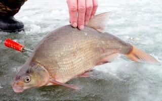 Спускник на леща зимой (комбайн) – оснастка и процесс ловли