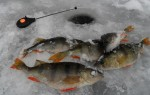 Особенности ловли окуня мормышкой по первому льду – важные моменты тактики, приманки, оснастка удочек