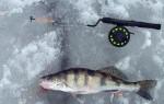 Мормышки на судака для зимней рыбалки – приманки, оснастка, техника ловли