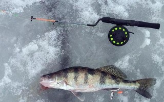 Мормышки на судака для зимней рыбалки — приманки, оснастка, техника ловли