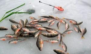 Снасти для ловли окуня зимой — приманки, удочки, оснастка