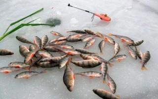 Снасти для ловли окуня зимой – приманки, удочки, оснастка