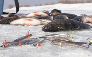 Ловля окуня на блесну зимой – правильная тактика и техника