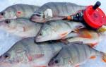 Ловля окуня зимой на мормышку – особенности тактики и оснастки