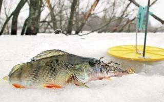 Ловля окуня на жерлицы зимой – флажки и поставушки