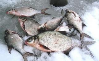 Ловля леща зимой на течении – поиск, снасти и техника