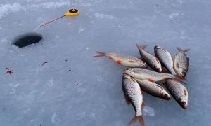 Особенности ловли плотвы в декабре — поиск, удочки и мормышки