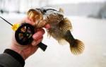 Снасти для ловли ротана зимой – виды и оснастка