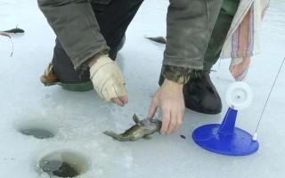 Ротан на жерлицы зимой — тактика и техника ловли