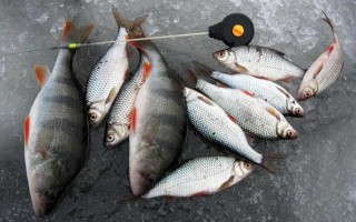 Ловля на безмотылку зимой — рыбалка безнасадочными мормышками