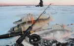 Ловля судака зимой – тактика, техника и поиск
