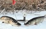 Ловля щуки в феврале на жерлицы
