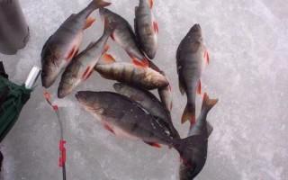 Бокоплавы на окуня зимой – особенности ловли, оснастка и монтаж