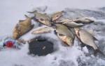 Ловля леща зимой — тактика, поиск, снасти, наживки и прикормка