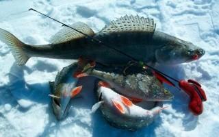 при каком давлении клюет рыба зимой