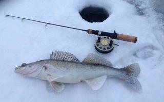 Ратлины для зимней рыбалки на судака, техника ловли и приманки