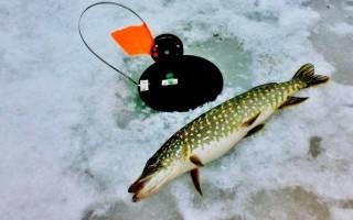 Ловля щуки в марте и апреле жерлицами – правильная техника и тактика по последнему льду