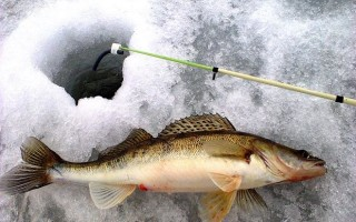 Ловля судака на балду зимой