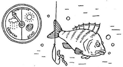 Давление и рыба