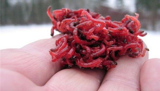 Комок личинок