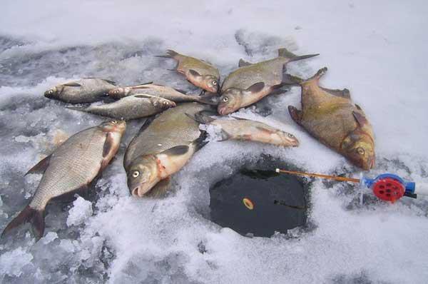 Зимний поплавок и лещи