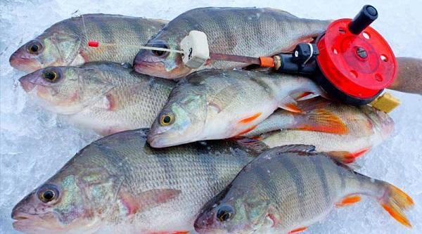 Самые уловистые мормышки на окуня для рыбалки зимой