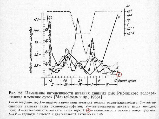 Схема ночного питания судака