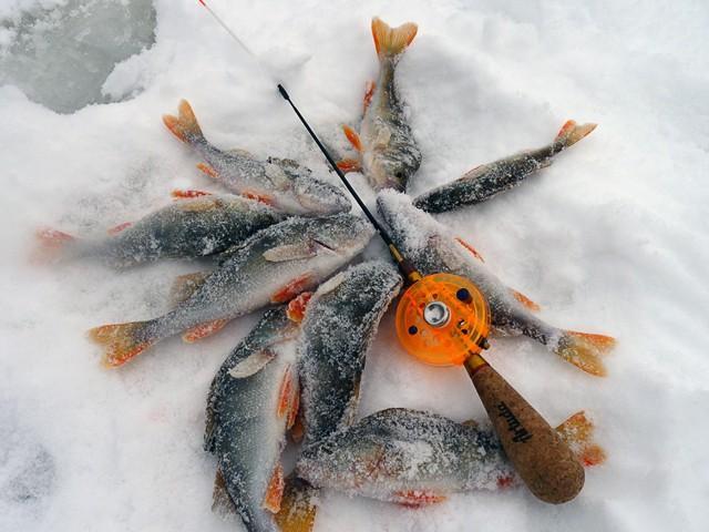 Ловля окуня зимой на мормышку: мотыльная и безмотыльная снасти