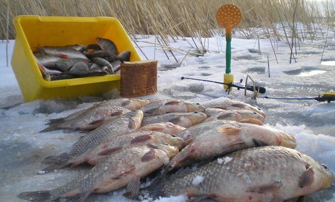 Зимний улов карасей на льду