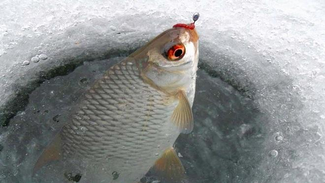 Плотва на мормышку по первому льду