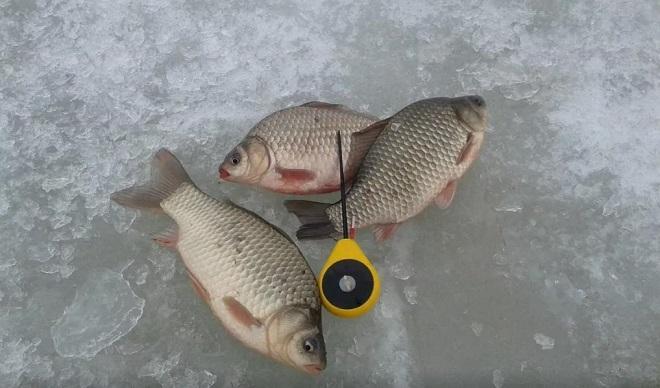 Балалайка на льду с карасями