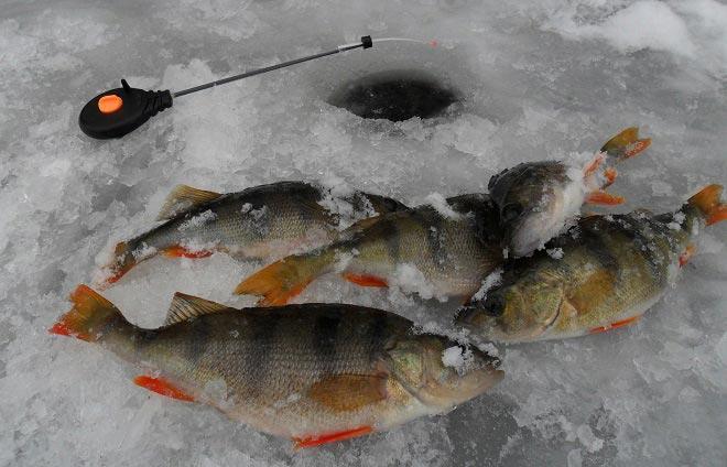 Мормышки на окуня по первому льду