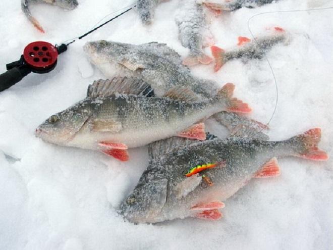 Рыбалка на окуня в декабре