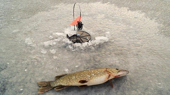 Жерлицы для зимней рыбалки - делаем своими руками, оснастка на щуку
